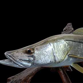snook sculptures