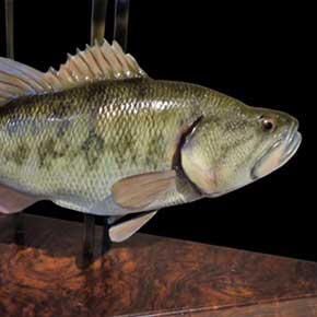 largemouth bass sculptures