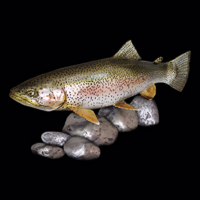 rainbow trout sculptures